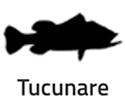 TUCUNARE